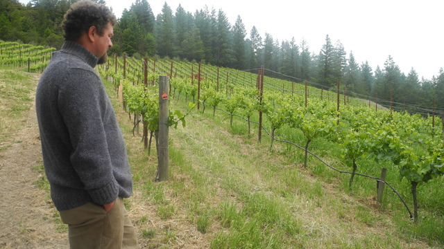 Organically: Western Sonoma Wine Tour