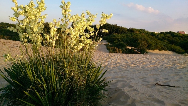 Explore Dunes and Nature of the Hague