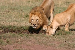 3 Days 2nights Maasai Mara