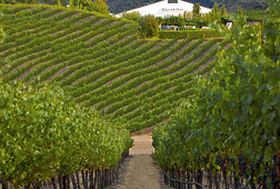 Luxurious Saturday Napa Wine Tour Date