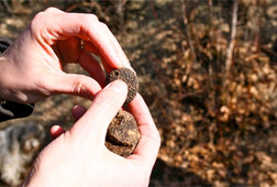 Winter Truffle Hunting Tour