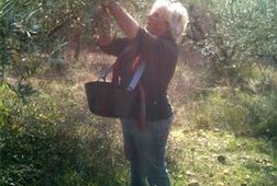 Olive-Picking Party in Provence!