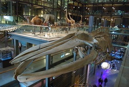 Museum of Natural History - Ticket Incl