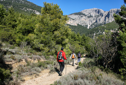 Join Us for a Hike on Mt Parnitha