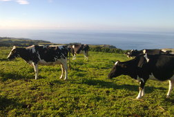 Meet Happy Cows & Taste Raw Milk